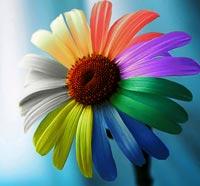 cvetik