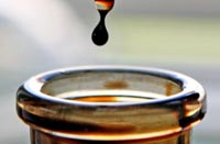 oil_kap